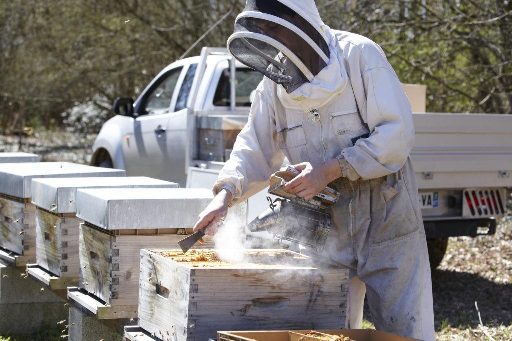 Miel-du-moulin-decouvrir-apiculture-limousin